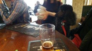Wellington the dog in a pub at Kingsdown